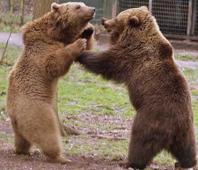Kerstmis, vrede of beren op je weg? Zo voelt het goed